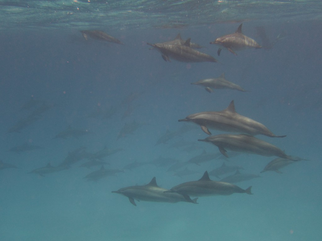 2015 Happy Dive Safari_Daniel_147